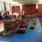 Portico Fundraisers Plant Sale Raises £460!